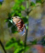 spider balance