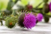 Thistle flowers on nature background