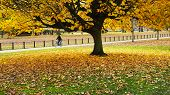Autumn In Hyde Park
