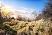 image of dry grass  - Dry trees and grass in autumn mountains