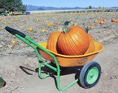 An Apple Annie's Pumpkin Barrow With Two Pumpkins