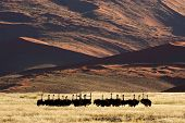 Desert landscape with ostriches (Struthio camelus), Sossusvlei, Namibia, southern Africa