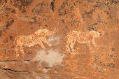 Bushmen (san) rock painting depicting rhinoceros, Drakensberg mountains, South Africa