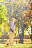 Full length portrait of a senior gentleman walking with a cane in a park, in autumn