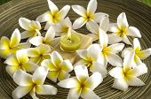 Pile of frangipani and candle on soap with on wooden plate