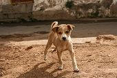 Cute stray puppy in streets of india