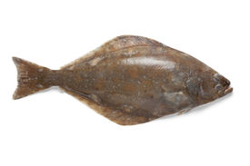 picture of halibut  -  Fresh halibut fish on white background - JPG