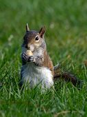 Sweet Squirrel Snacking
