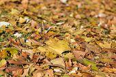 City Park In Autumn,getafe,madrid