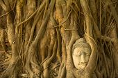 Buddha head in the roots of the tree - symbol of Ayutthaya.