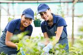 stock photo of greenhouse  - beautiful young gardeners working inside greenhouse - JPG