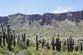 Cienaga, Quebrada De Humahuaca, Jujuy, Argentina.