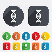 DNA sign icon