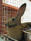 Shelter Rabbit