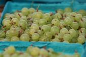 Basket of Gooseberries