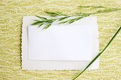 card with blade of grass