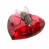 Fly On  Red Gemstone