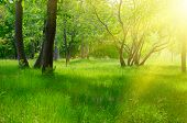 Sunny spring forest at morning