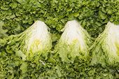 stock photo of butter-lettuce  - green leaf lettuce on a table in a market - JPG