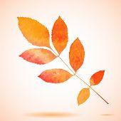 Orange watercolor painted vector ash tree leaf