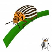 Colorado potato beetle sits on a stalk.