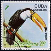 CUBA - CIRCA 1989: A stamp printed in the Cuba shows the exotic bird (toucan) ramphastos toco