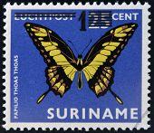 SURINAME - CIRCA 1980: A stamp printed in Surinam shows a butterfly papilio thoas thoas circa 1980