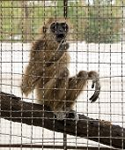 Young monkey in a cage in a zoo in Pattaya in the afternoon