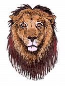 artwork lion, sketch drawing of head animals