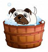 Illustration of a bulldog inside the bathtub on a white background