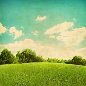 Green field with cornflowers over blue sky in grunge and retro style.