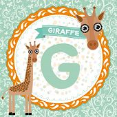 Abc Animals G Is Giraffe. Childrens English Alphabet. Vector