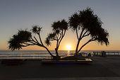 Gold Coast ocean sunrise, pandanus silhouette