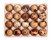 Twenty Quail Eggs In The Package