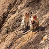 Monkey Family In The Mountain