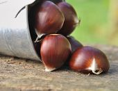 Chestnuts On Board