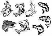 picture of aquatic animal  - Cartoon salmons fish set for fishing sports or seafood design - JPG