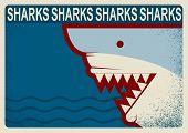 Shark Poster.vector Background Illustration For Design