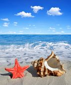 foto of conch  - Conch shell with starfish on beach - JPG