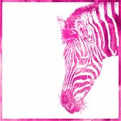 watercolor animal background in pink color, head of zebra, vecto