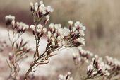 Beautiful Autumn Grass