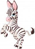 Illustration of very cute baby zebra