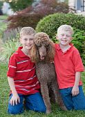 stock photo of standard poodle  - Two Brothers Sitting With Their Standard Poodle - JPG