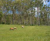 Australian Rural Bush Scene