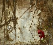 Grunge Bougainvillea Art Background