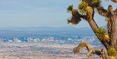 Joshua Tree And The Las Vegas Strip