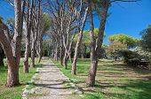 stock photo of filerimos  - Trees at the Calvary avenue path at Ialyssos monastery on the Greek island of Rhodes is built at the top of Mount Filerimos - JPG