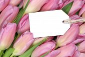 Tulips Flowers In Spring Or Mother's Day With Empty Tag And Copyspace