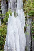 Limestone pinnacles at gunung mulu national park