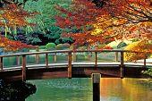 Klassieke Japanse tuin Tokio, Japan